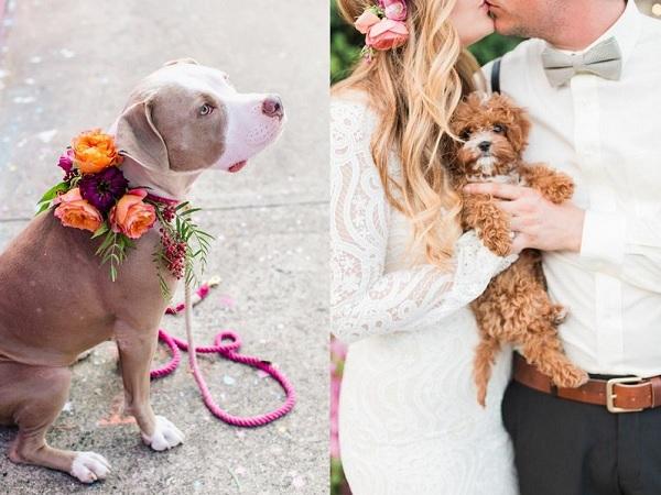 Twee bruiloft honden