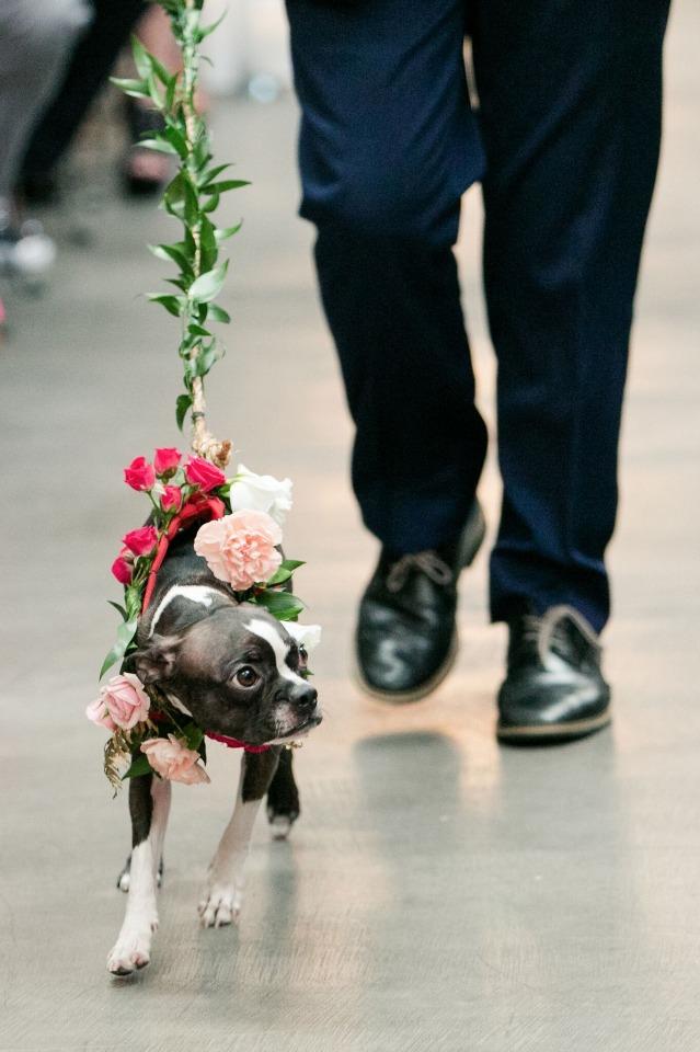 Hond als ringdrager op bruiloft