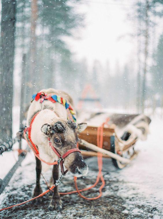 Winter huwelijksreis in Lapland