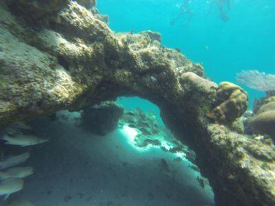 Free dive!