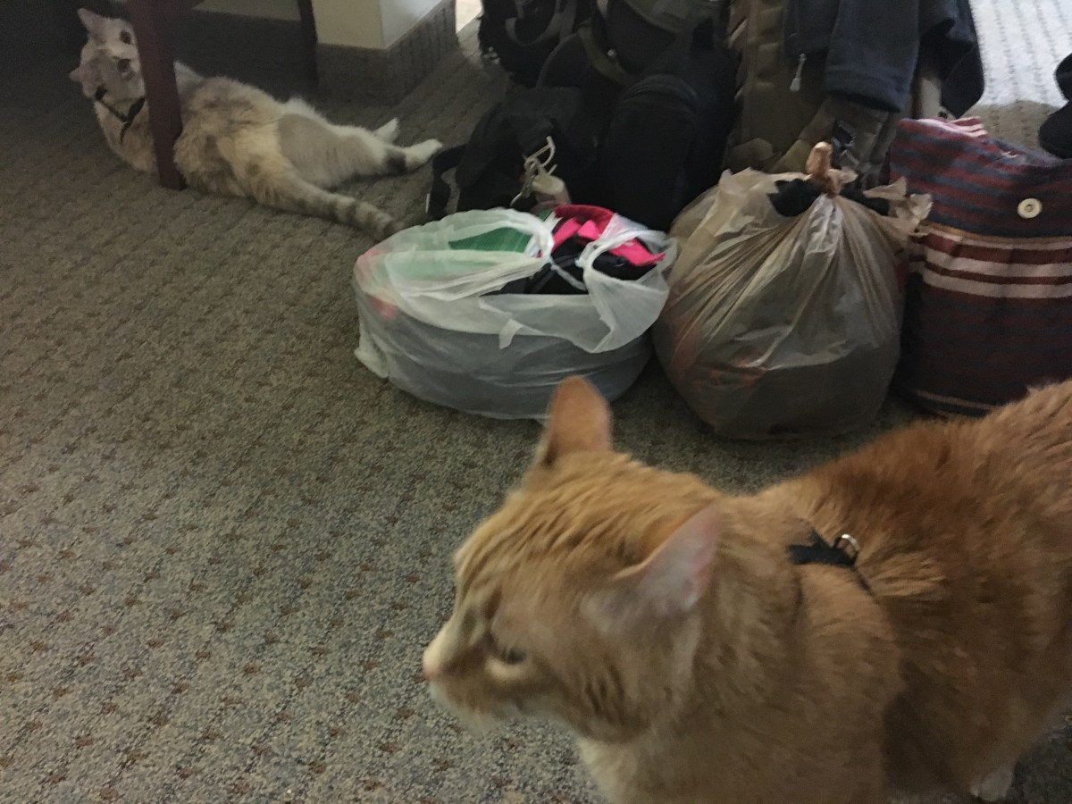 Traveling with Pets: The Kitties in Monterrey