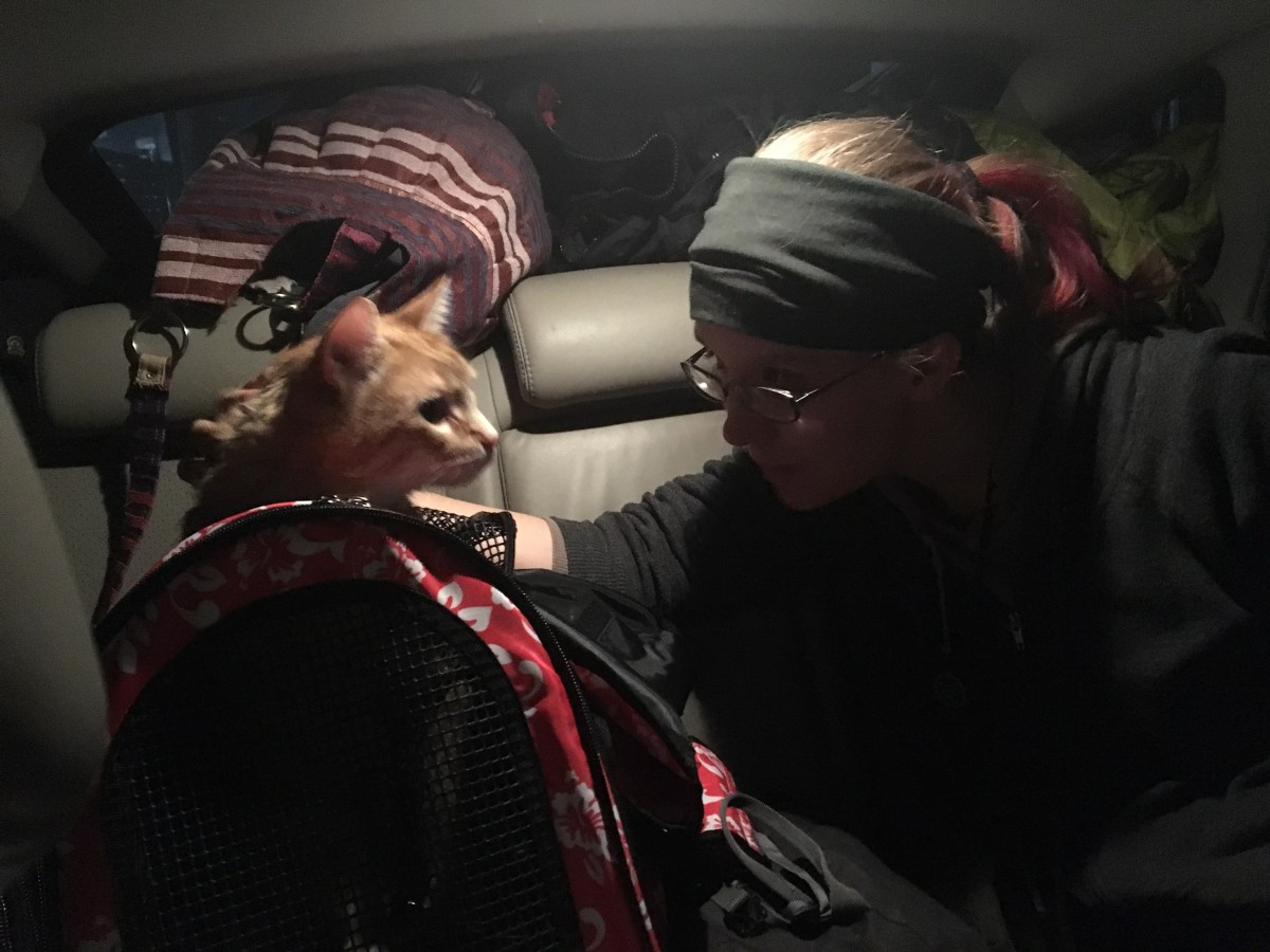 Traveling with Pets: Garfield Wants Out