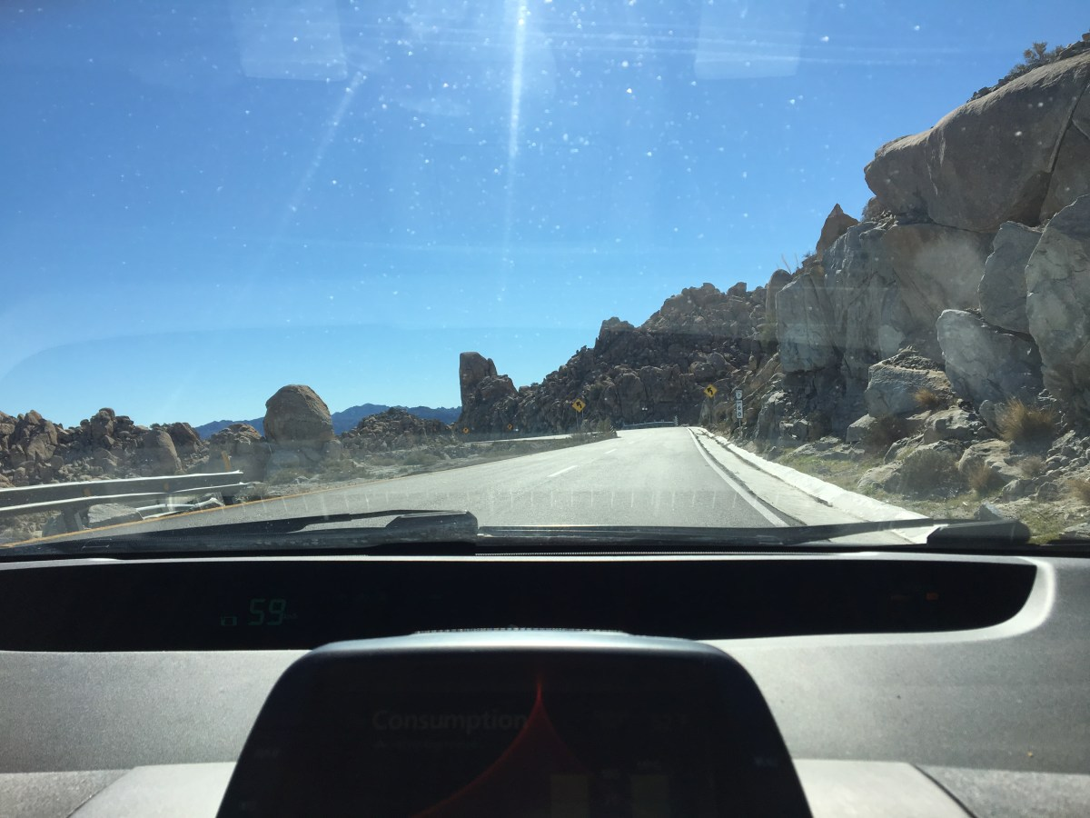 Driving in Mexico: MORE Joshua Trees