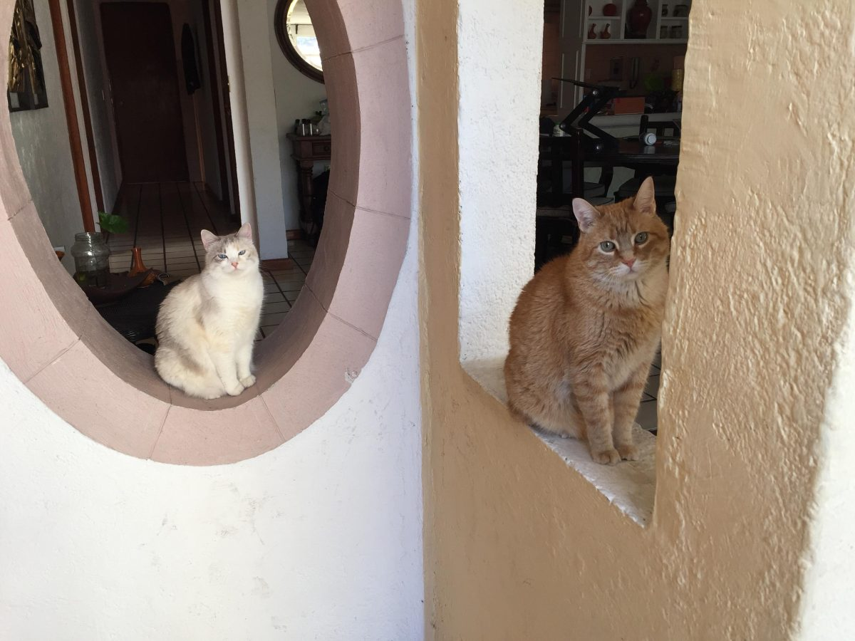 Los Gatos Aventuros: Driving to Mexico with Two Cats