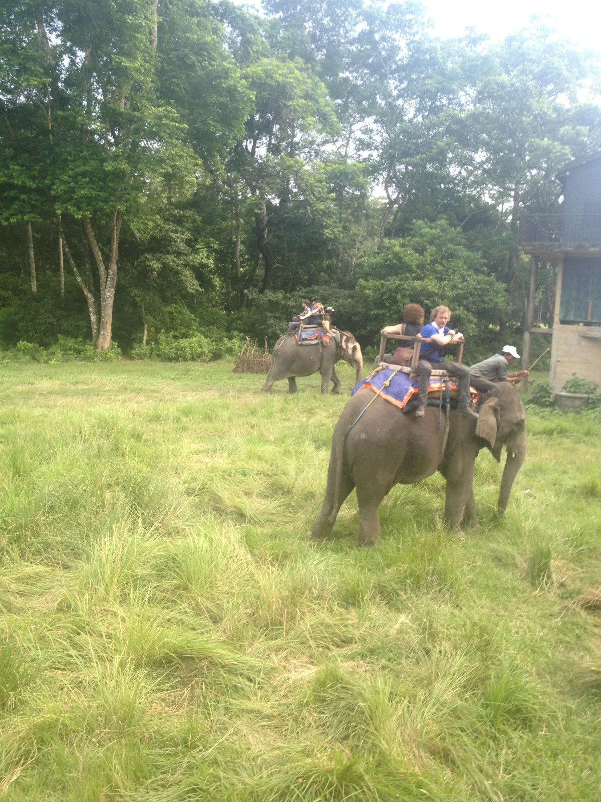 Chitwan National Park Safari: Riding Elephants