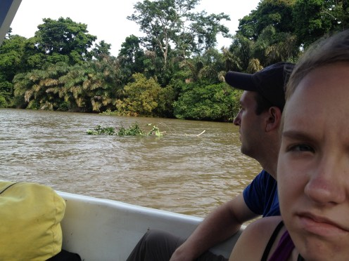 There were quite a few tree branches on the river leaving Tortuguero.