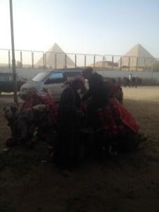 Cairo Egypt Camels Pyramids