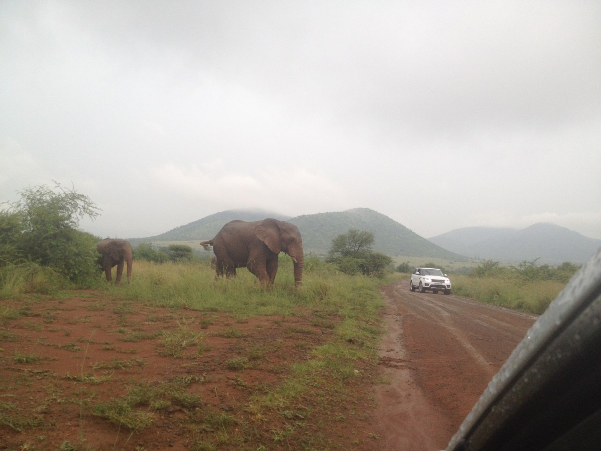 Johannesburg Tourism: South African Safari at Pilanesberg