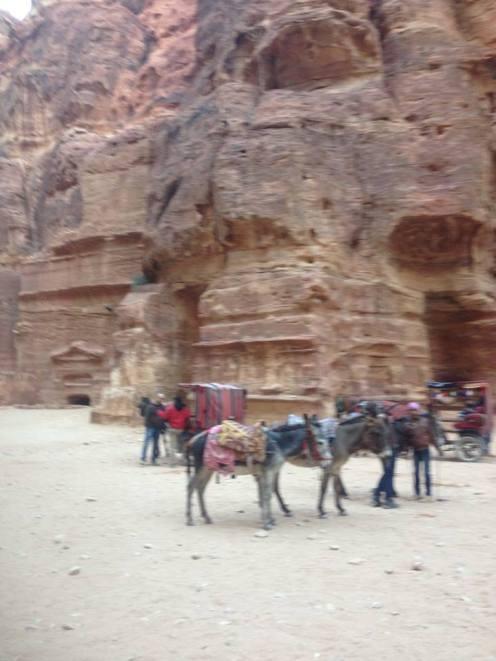 Petra Jordan Donkeys