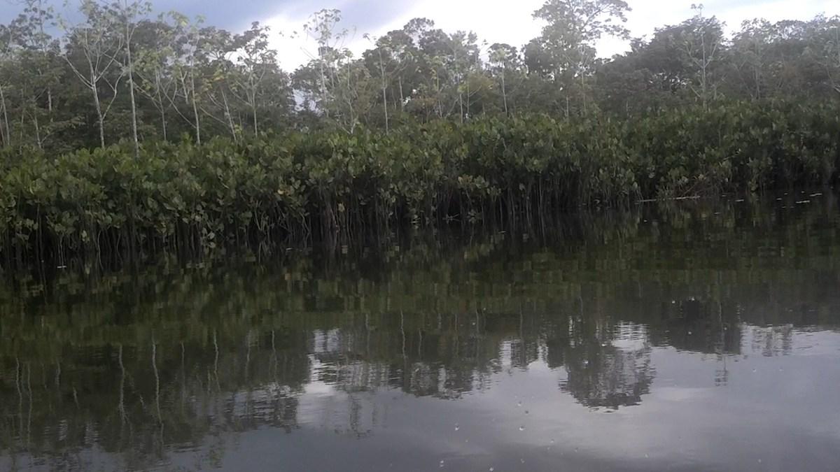 Birds along the Amazon River in the Amazon Rainforest