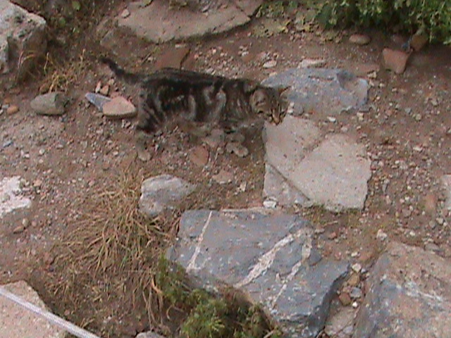 Ephesus Turkey Cats