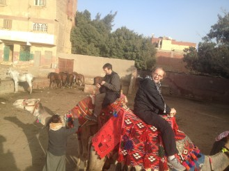 Camels Lydian Nazlet Al Sammam Cairo Egypt