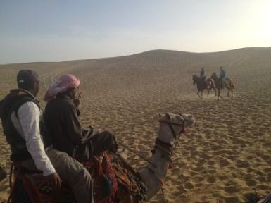 Nazlet Al Sammam Cairo Egypt Camels Horses
