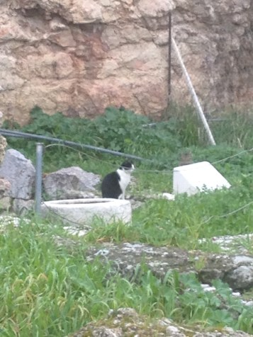 A black and white kitty chilling out on some rocks at the Acropolis.