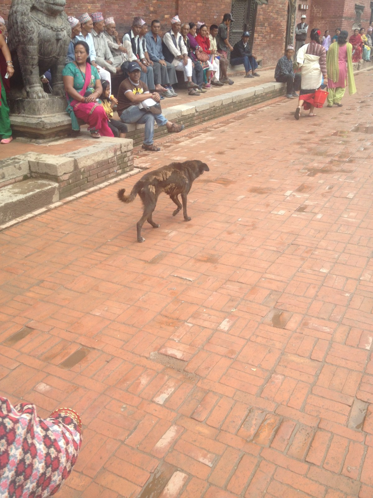Killing Cadbury in Kathmandu– By Jennifer Shipp