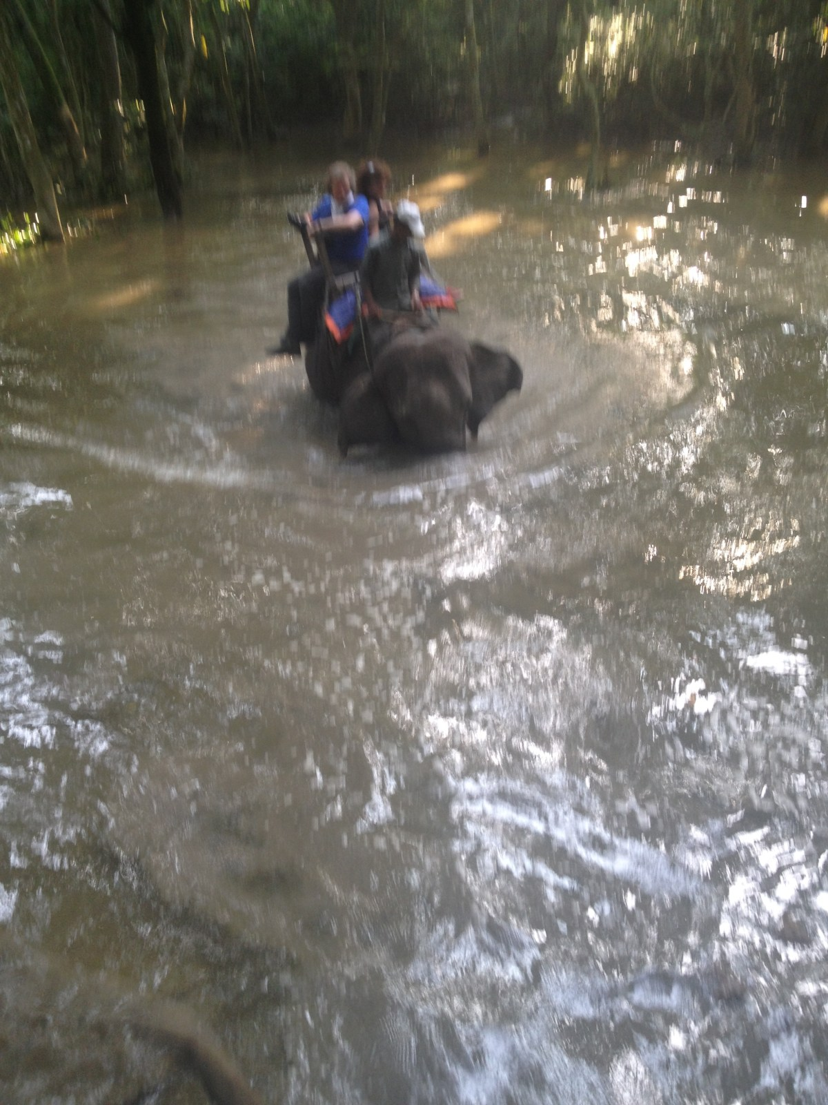 Chitwan National Park: Boarding and Riding an Elephant