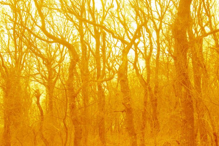 Velvet wood # 1