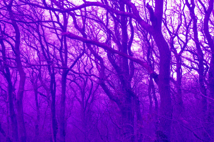 Velvet wood # 4