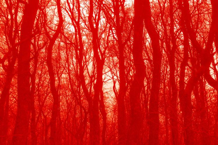 Velvet Wood # 5