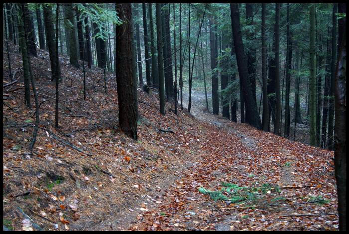 las w okolicach Miedzianej Gory