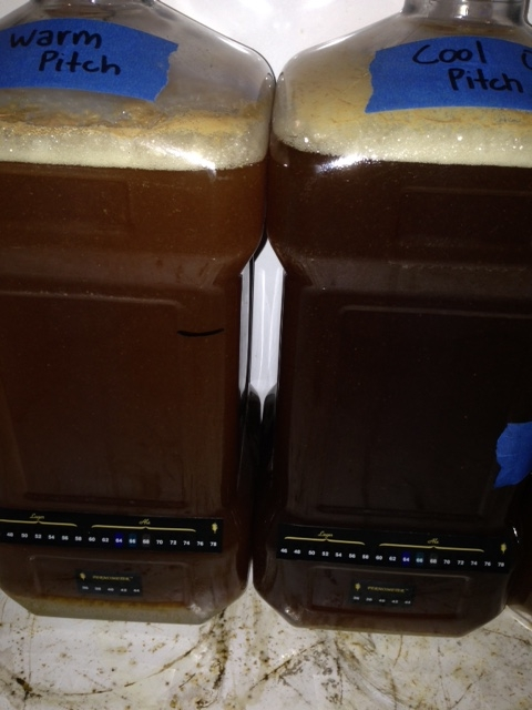 Yeast Pitch Temperature: Cool vs  Warm | exBEERiment Results