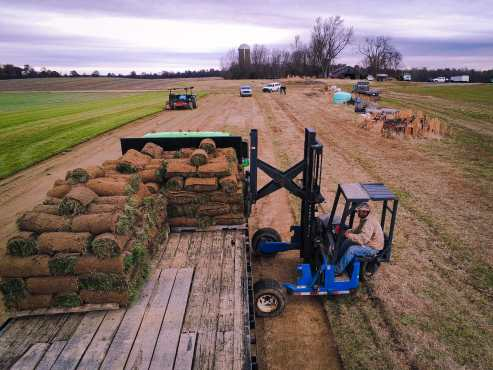 grass sod farmer, Kentucky, grass sod