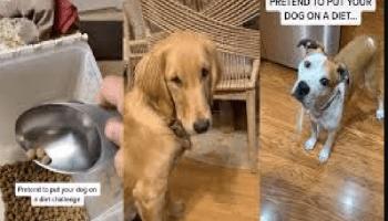 Put Your Dog On Diet Challenge
