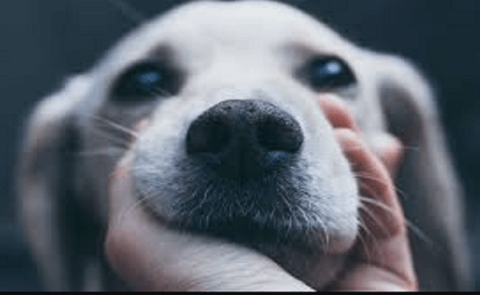 Image Of Drop Your Beautiful Dog Challenge Facebook