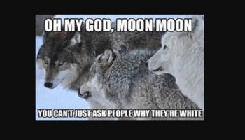 Moon Moon Meme