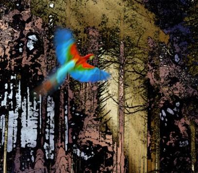 forêt_magique_2