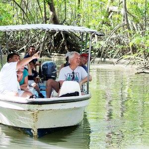 mangrove boat tour animal watching