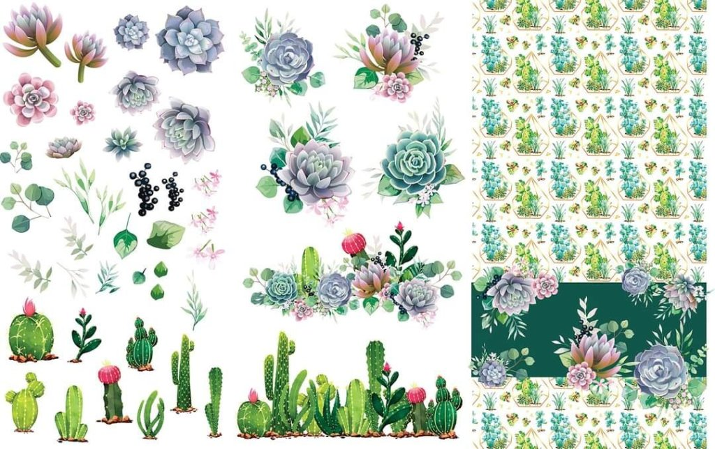 Cacti and Succulents Design Dixie Belle Transfer