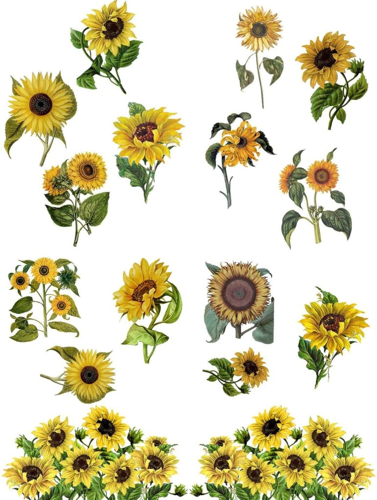 Sunflowers Dixie Belle Furniture Transfer