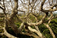 Geheimnis-Bäume-Bild+06