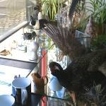 rue du Pageのお店探訪その3 – La Meute