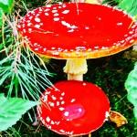 Rixensart(リクサンサール)の森のキノコ