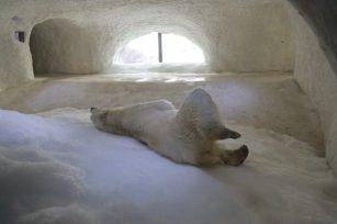 Ours mâle grotte de glace PDZ