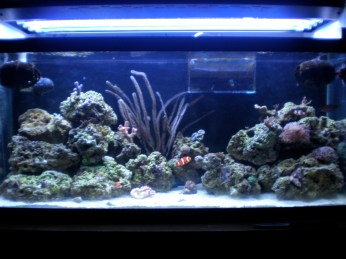 30 Gallon Reef
