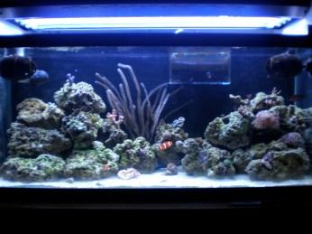 30 Gallon Reef