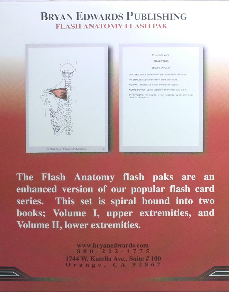 Muscular System flash cards - bryanedwards.com