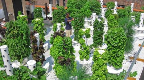 aeroponic Tower Gardens 5