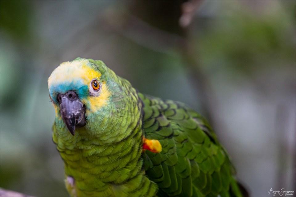 Parrot_GP_8444