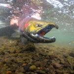 gregson_underwater-100