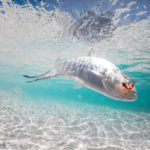 gregson_underwater-112