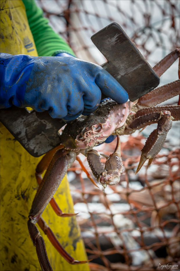 Chrome-Chaser-Lodge_Alaska_Crab_Bryan-Gregson-Photography_4