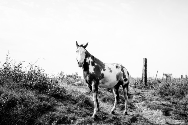 Gregson_Bryan_Paint Horse-6
