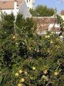 A jungle of Arriate fruit