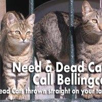 Bellingcat: the Dead Cat Factory