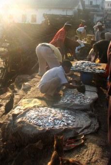 Morning Light on fish market in Stone Town, Zanzibar