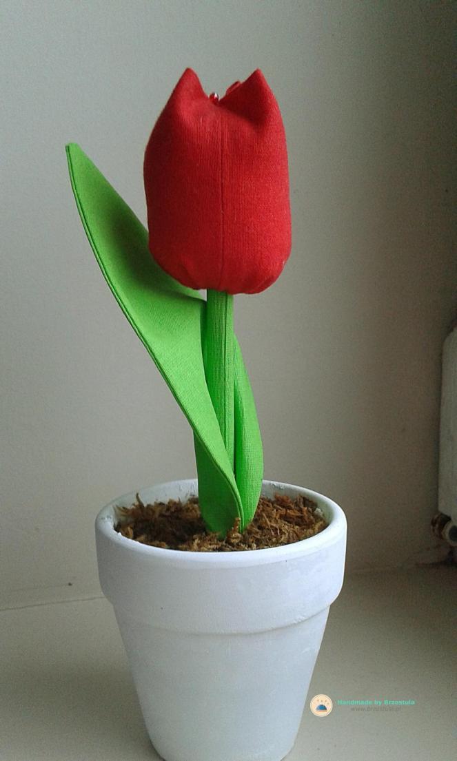 tulipan w doniczce diy